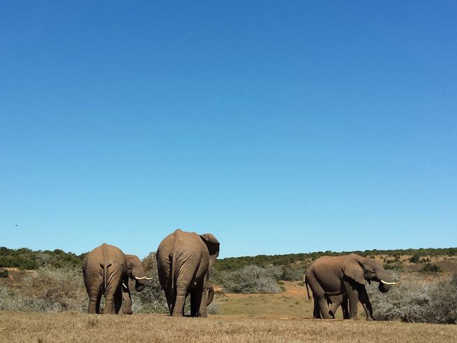 3 Days Addo Elephant National Park Safari in South Africa