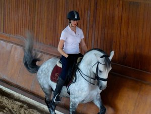 4 Days Five-Lesson Intensive Dressage Horse Riding Holiday in Portugal