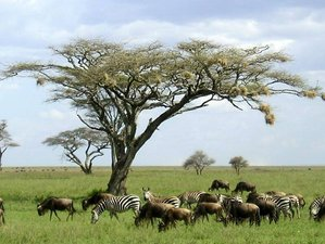 4 Days Jeep Safari Tour in Tanzania