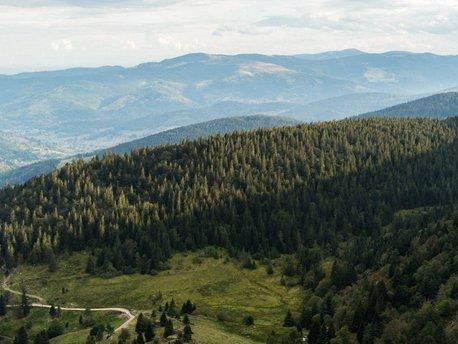 Vosges Mountains area