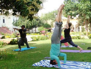 25 Days Invigorating Yoga Tours in India
