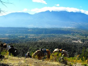 6 Day Intermediate to Advanced Horse Riding Holiday in Northern Patagonian Andes