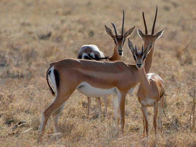 3 Days Tsavo East and Amboseli Safari in Kenya