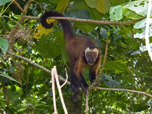 8 Day Manu National Park Jungle Safari With River Rafting and Canopy Zip Lining in Peru