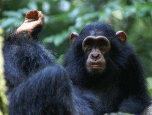 8 Days Primate Tour and Wildlife Safari in Uganda