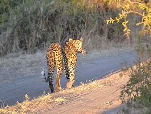 7 Days Big Five Safari in Botswana