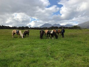 5 Day Riding the Rift Valley Horse Riding Holiday at Thingvellir National Park