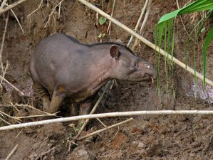2 Day Exhilarating Wildlife Tour in Tambopata, Madre de Dios Region