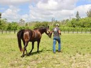 8 Day Thrive Resilience Horse-Facilitated Wellness Retreat in Loxahatchee Groves, Florida