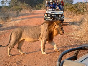 22 Days Exciting Budget Safari in Zambia
