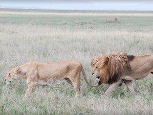 6 Days Simba Safari in Tanzania