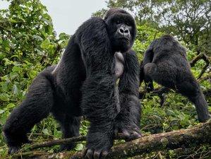 3 Day Mountain Gorilla Trekking in Bwindi Impenetrable National Park