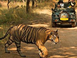 3 Day Tigers Tour Safari in Bandhavgarh National Park