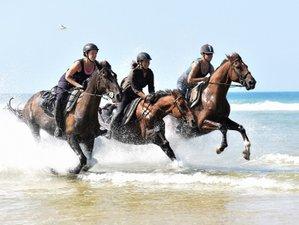 8 Day Atlantic Coast Trail Horseback Riding Holiday in Mimizan, Landes
