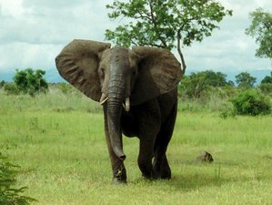 8 Days Budget Guided Safari in Kenya