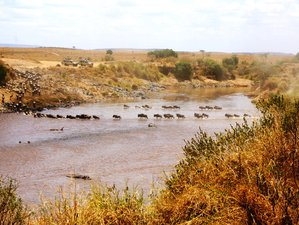 6 Days Extraordinary Wildebeest Migration Safari in Kenya