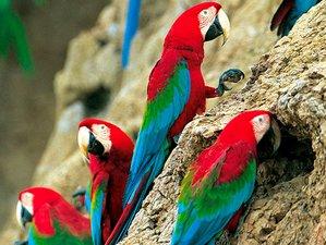 3 Day Exciting Wildlife Tour in Pacaya-Samiria National Reserve, Loreto
