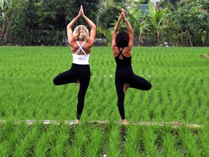 28 Days 200-Hours Hatha Yoga Teacher Training in Bali