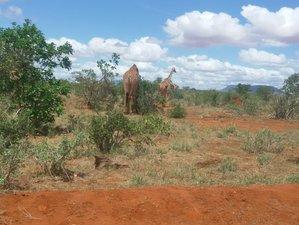 4 Days Breathtaking Road Safari in Kenya