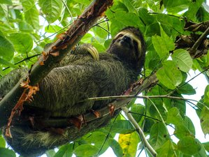 9 Day Eco-adventure Wildlife Tour in Costa Rica