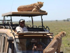 5 Days Best of Northern Tanzania Memorable Lodge Safari