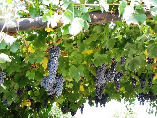 4 Days Italy Wine Tours and Truffles and Castles Trip