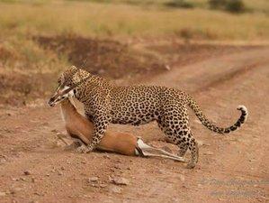 7 Days Fantastic Wildlife Safari to Northern Tanzania