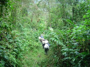 4 Days Gorilla Trekking in Bwindi and WildLife Game Viewing in Queen Elizabeth National Park