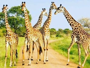 4 Days Safari Tour in Kruger and Panorama Route, South Africa