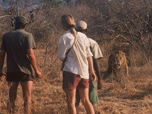 4 Days Chitake Spring Safari in Mana Pools National Park, Zimbabwe