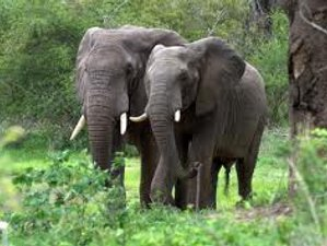 5 Days Tanzania Camping group Safari in Lake Manyara and Ngorongoro