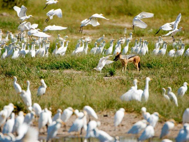 9 Days Photography River Safari in Botswana