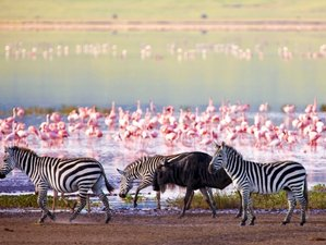 5 Days Highlights of Safari in Tanzania