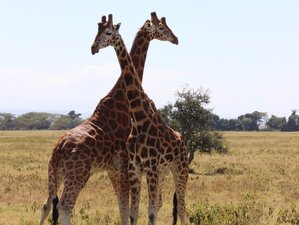 3 Days Safari in Tsavo East and West National Parks from Mombasa, Kenya