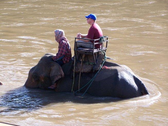 4 Days Elephant Riding Thailand Culinary Tour