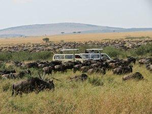 10 Days Fun Beach Holiday and Safari in Maasai Mara, Lake Nakuru, Naivasha, and Amboseli, Kenya