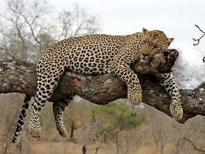 3 Days Buffalo Rock Kruger National Park Safaris