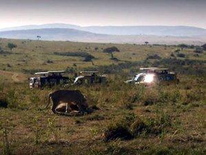 7 Days Amazing Safari in Tanzania