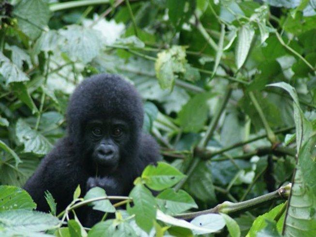 5 Days Lake Mburo and Gorilla Safaris in Uganda