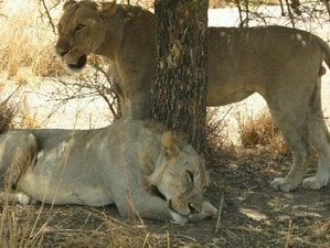 5 Days Stargazer's Dream Safari in Tanzania