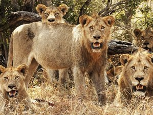 2 Days Kruger Park Safari With Overnight Lodge Accommodation