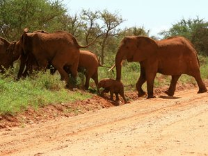 3 Days Guided Excursion and Safari at Nairobi, Kenya