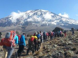 7 Days Kilimanjaro Climb Safari in Tanzania