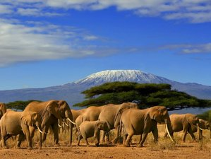 4 Days Tsavo East,West, and Amboseli Best Safari in Kenya