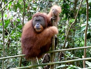 8 Day Amazing Safari in North Sumatra