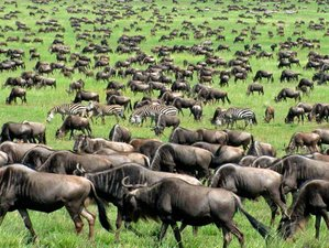 8 Days Highlights of Africa Tour and Safari in Tanzania