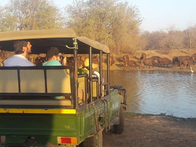 6 Days Lodge and Tree House Safari in Kruger Park, South Africa