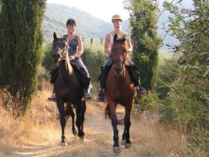 8 Days Beginner Horse Riding Holiday in Crete, Greece