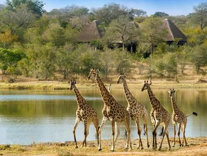 5 Days Sabi Sand Private Luxury Safari in South Africa