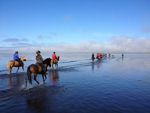 5 Day Trail of Hope Horse Riding Holiday in Hvammur